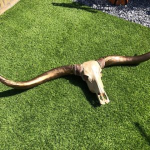 Mooie longhorn met bronze horens, deze heeft een afmeting van 1.70m.