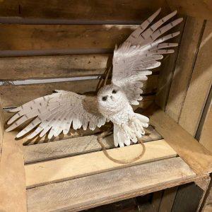 Vliegende uil wit