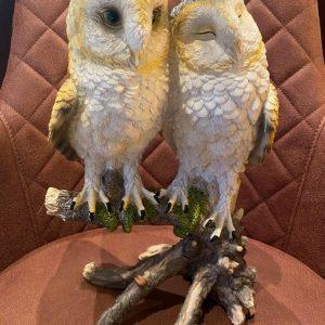 2 uilen op tak