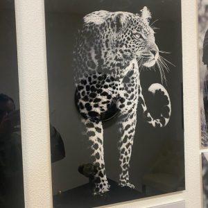 Glas schilderij panter xl met staart