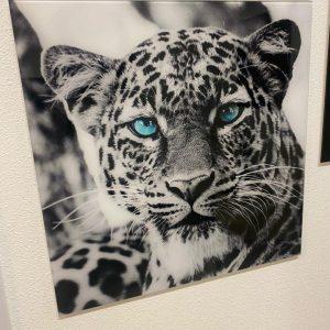 Glas schilderij panter blauw oog