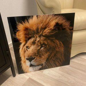 Glas schilderij leeuw color
