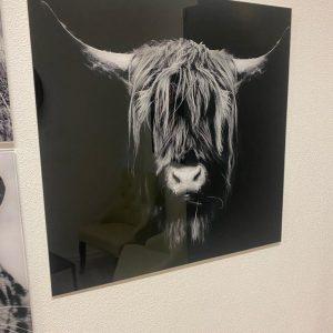 Glas schilderij buffel zwart wit