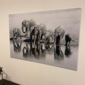 Glas schilderij olifanten xl zwart wit