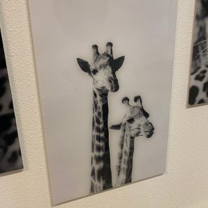 Glas schilderij giraffe zwart wit