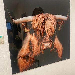 Glas schilderij buffel color