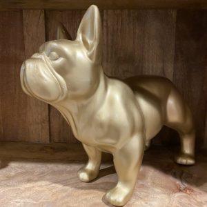 Bulldog goud